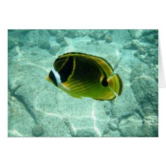 熱帯魚Notecard カード