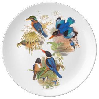 熱帯鳥の磁器皿 磁器プレート