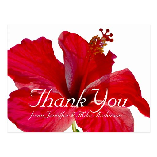 熱帯 赤い ハイビスカス 花 感謝していして下さい  葉書き