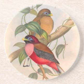 熱帯Troganの鳥の野性生物動物 コースター