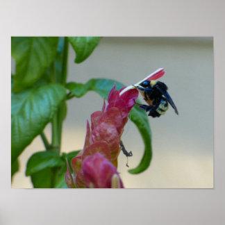 熱望した蜂 ポスター