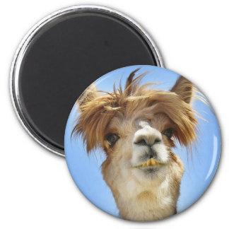 熱狂するな毛を搭載するアルパカ マグネット