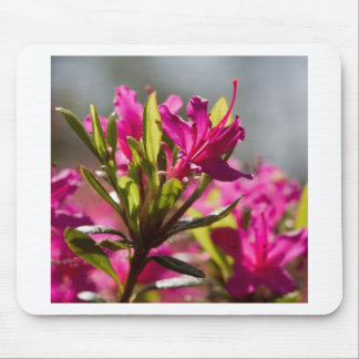 爆発のピンクの花 マウスパッド