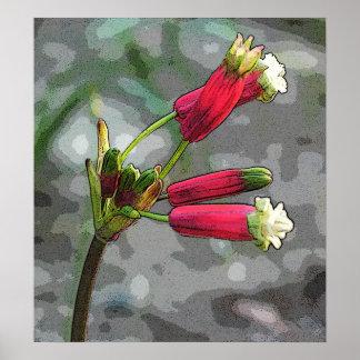 爆竹の開花 ポスター