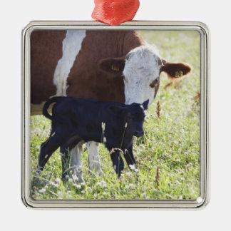 牛および子牛 シルバーカラー正方形オーナメント