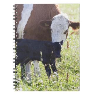 牛および子牛 ノートブック