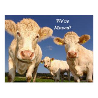 牛引っ越しましたの新しい住所郵便はがき ポストカード