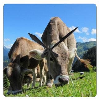 牛時計を牧草を食べること スクエア壁時計