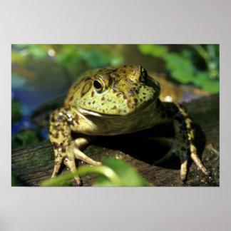 牛蛙 ポスター