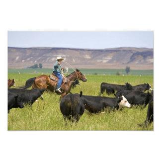 牛集合2の間の馬上の牧場主 フォトプリント