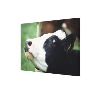 牛 キャンバスプリント