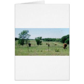 牛(農場で) カード