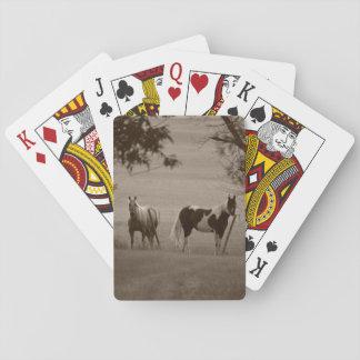 牧場馬 トランプ