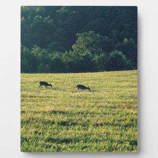 牧草を食べているシカ フォトプラーク