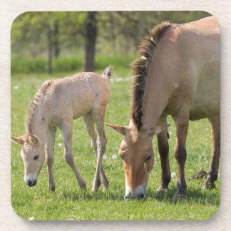 牧草を食べているPrzewalskiの馬および子馬 コースター