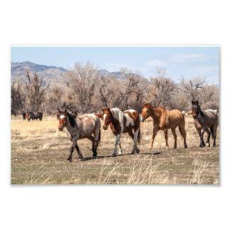 牧草地から来ている馬 フォトプリント
