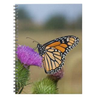 牧草地のアザミの草原リッジの(昆虫)オオカバマダラ、モナーク ノートブック