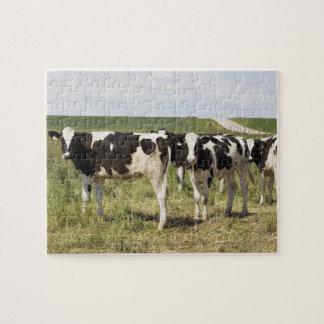 牧草地の若い乳牛 ジグソーパズル