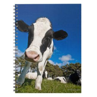 牧草地2で食べ物を与えている牛 ノートブック