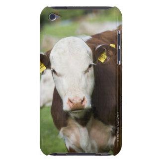 牧草地、クローズアップの牛 Case-Mate iPod TOUCH ケース