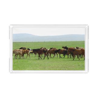 牧草地-景色の写真の馬 アクリルトレー