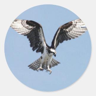 犠牲を捜している美しいミサゴの鳥 ラウンドシール