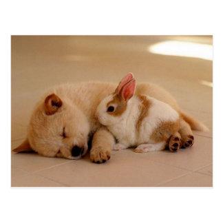 犬およびウサギ ポストカード