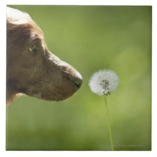 犬およびタンポポ タイル