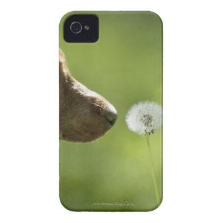 犬およびタンポポ Case-Mate iPhone 4 ケース