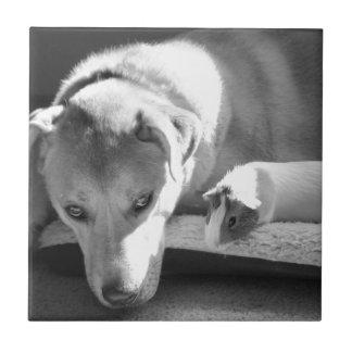 犬およびモルモットのタイル タイル