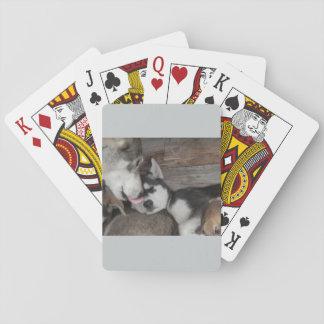 犬のトランプゲーム トランプ