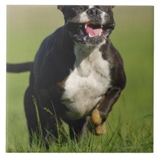 犬のランニング タイル