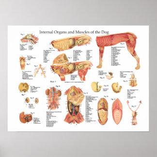 犬の内臓の解剖学ポスター図表 ポスター