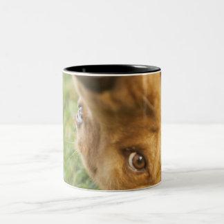 犬の圧延の背部 ツートーンマグカップ