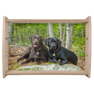犬の子犬の黒い実験室チョコレートラブラドールは取り出します トレー