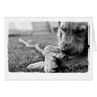 犬の恋人の挨拶 グリーティングカード