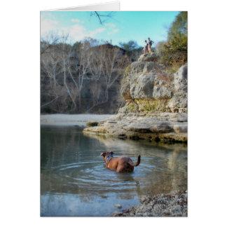 犬の水泳のキャンベルの穴のバートンの入り江オースティンテキサス州 カード