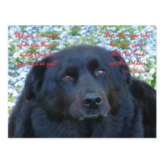 犬の生命…窓 ポストカード