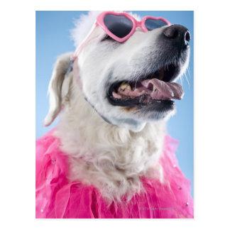犬の身に着けているハート形のクラスおよびチュチュ ポストカード