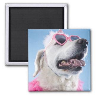 犬の身に着けているハート形のクラスおよびチュチュ マグネット