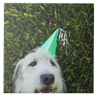 犬の身に着けているパーティーの帽子 タイル