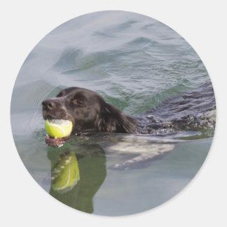 犬は口の球と泳ぎます ラウンドシール