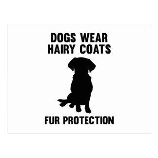 犬は毛深いコートの毛皮の保護を身に着けています ポストカード