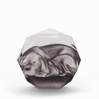 犬及び猫の抱擁の睡眠 表彰盾