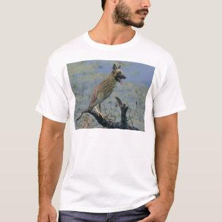 犬鳥 Tシャツ