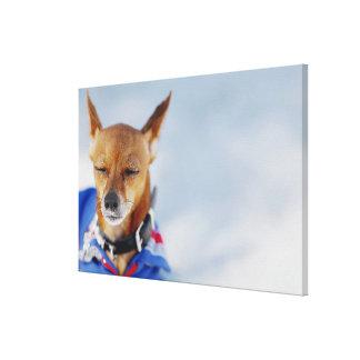 犬2のクローズアップ キャンバスプリント