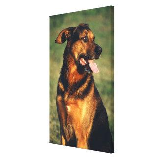 犬2 キャンバスプリント