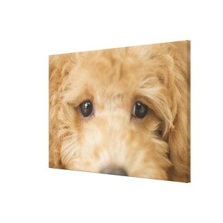 犬3 キャンバスプリント