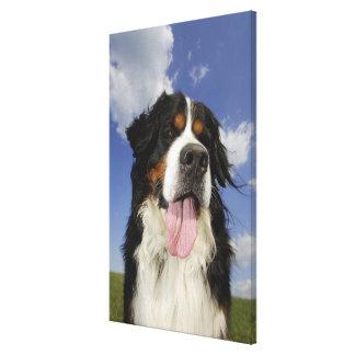 犬、クローズアップ キャンバスプリント