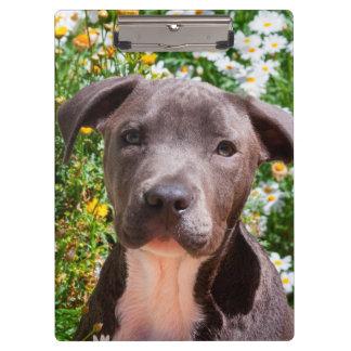 (犬)スタッフォードのブルテリアの子犬のポートレート クリップボード